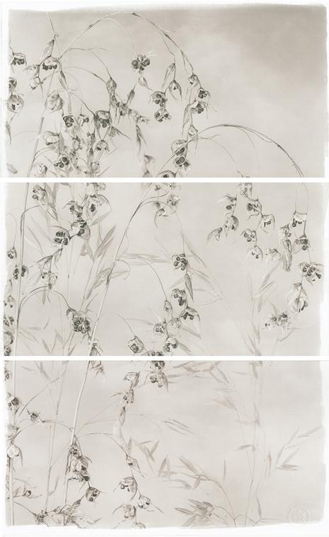 Valley Grasses IV © Brigitte Carnochan