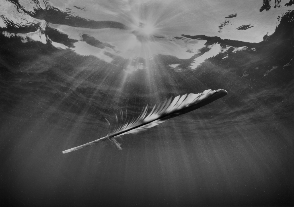 Feather With Ocean Light, © Chuck Davis