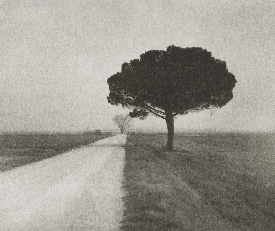 Pine on Gravel Road Domenico Foschi