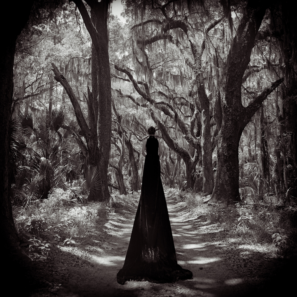 Black Velvet © Lori Vrba