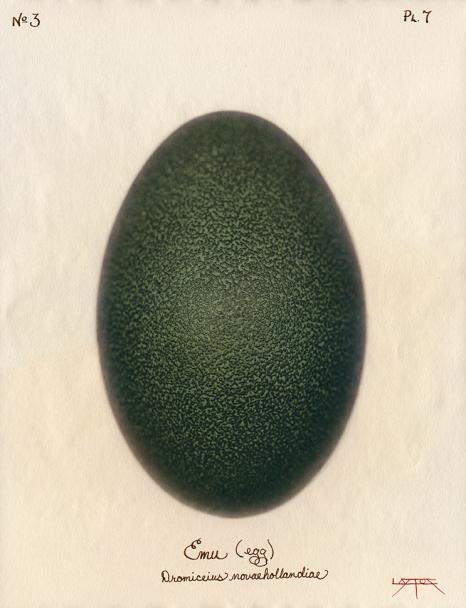 Emu Egg © Laszlo Layton