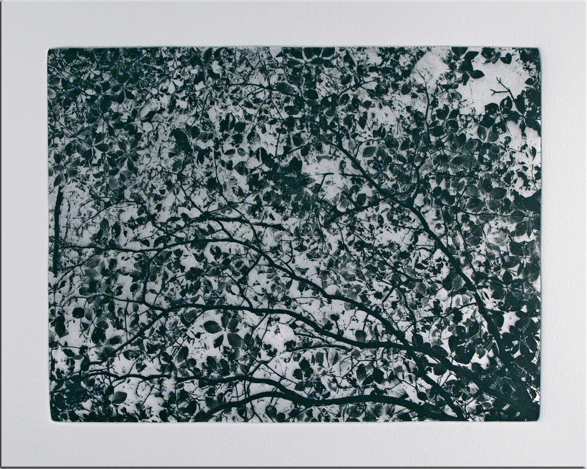 Leaf Whispers © Peter Miller