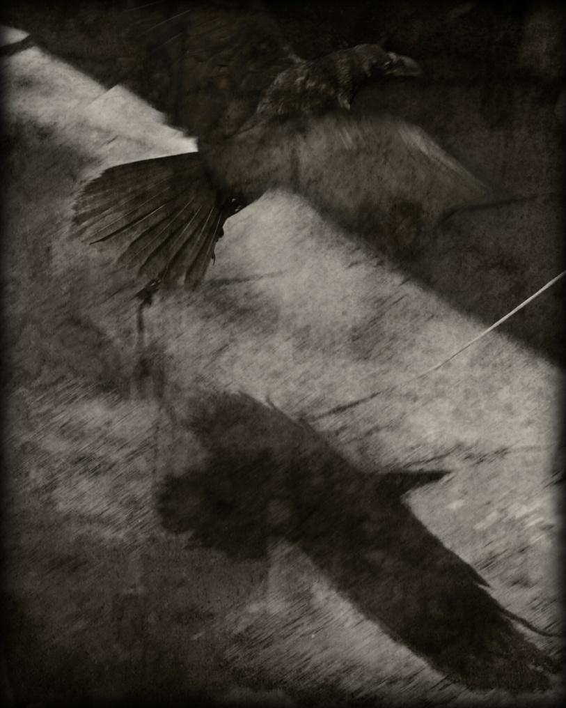 Raven Bait © Ann George