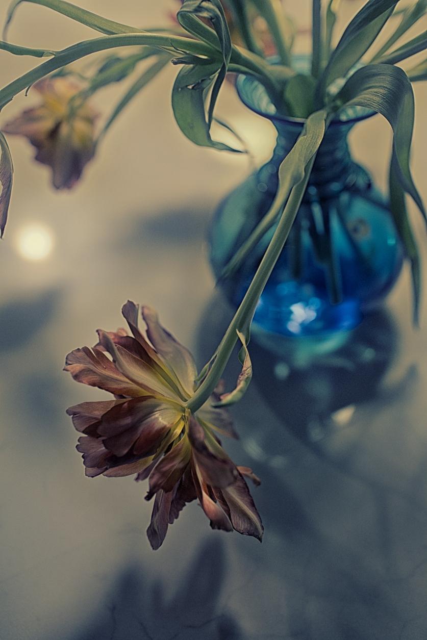 Flower 12 © C.Rosenthal