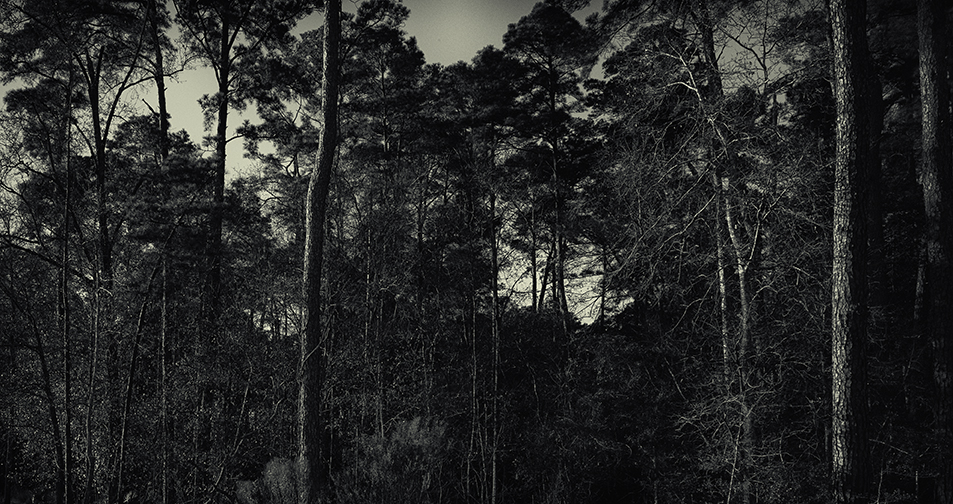 In the Woods © J.Rosenthal