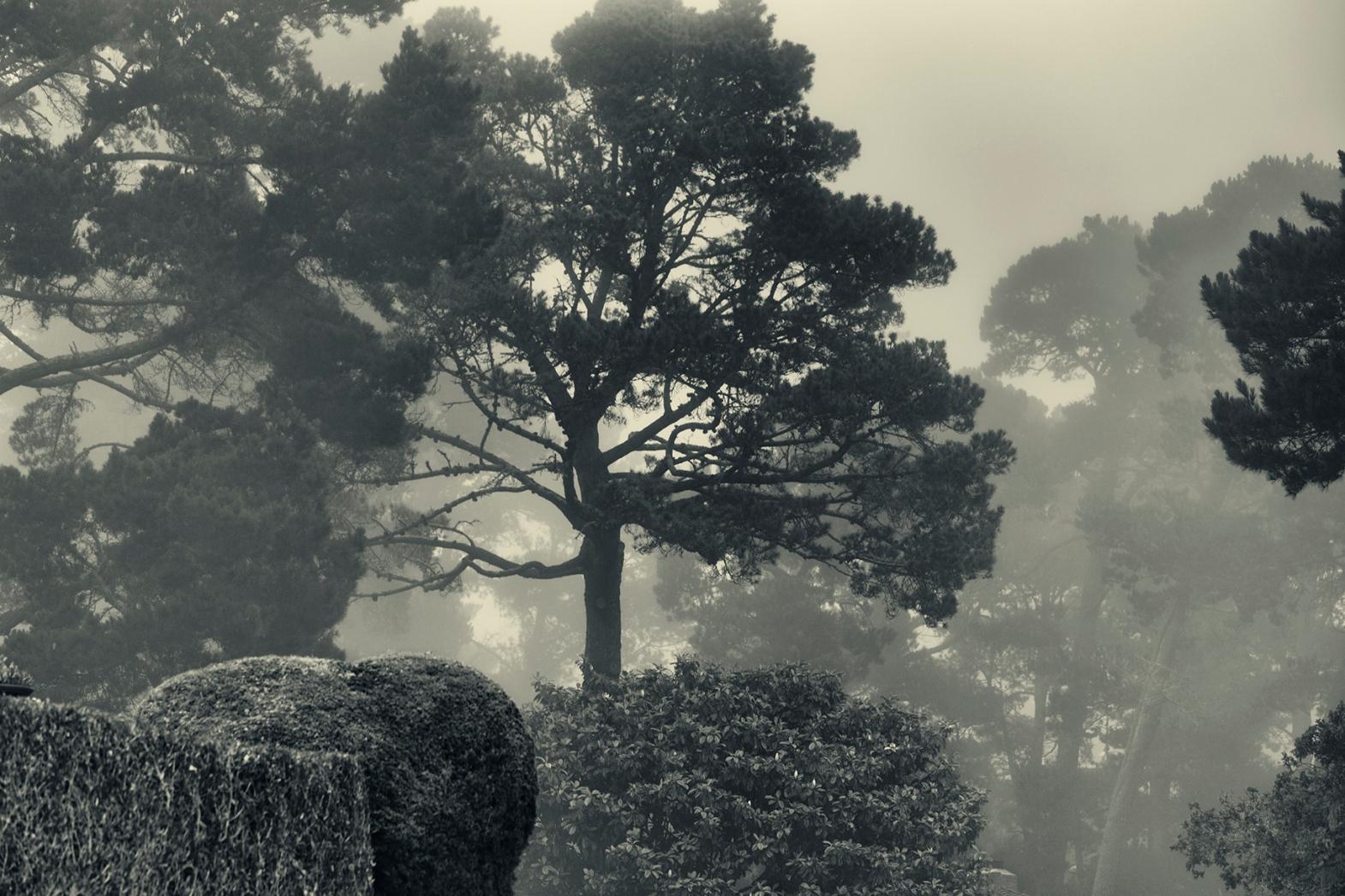 Morning Garden © C.Rosenthal