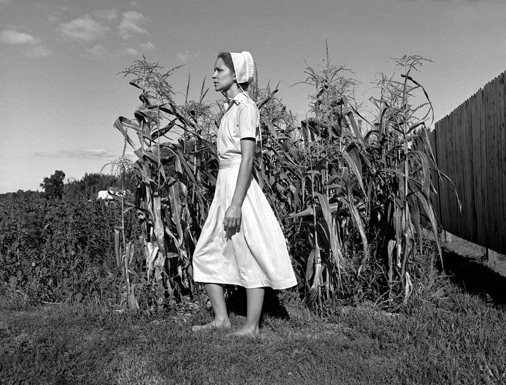 Harvest © Honey Lazar