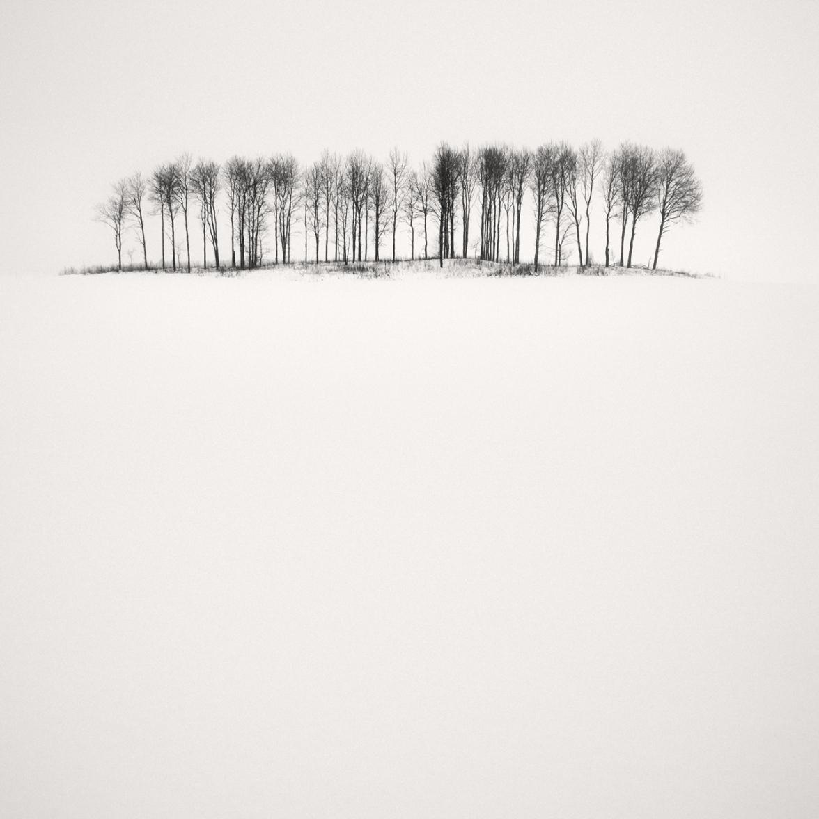 Birches In Snow,2013, © Frang Dushaj
