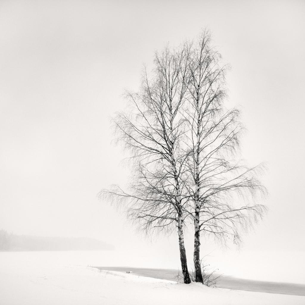 Silver Birches,2014, © Frang Dushaj