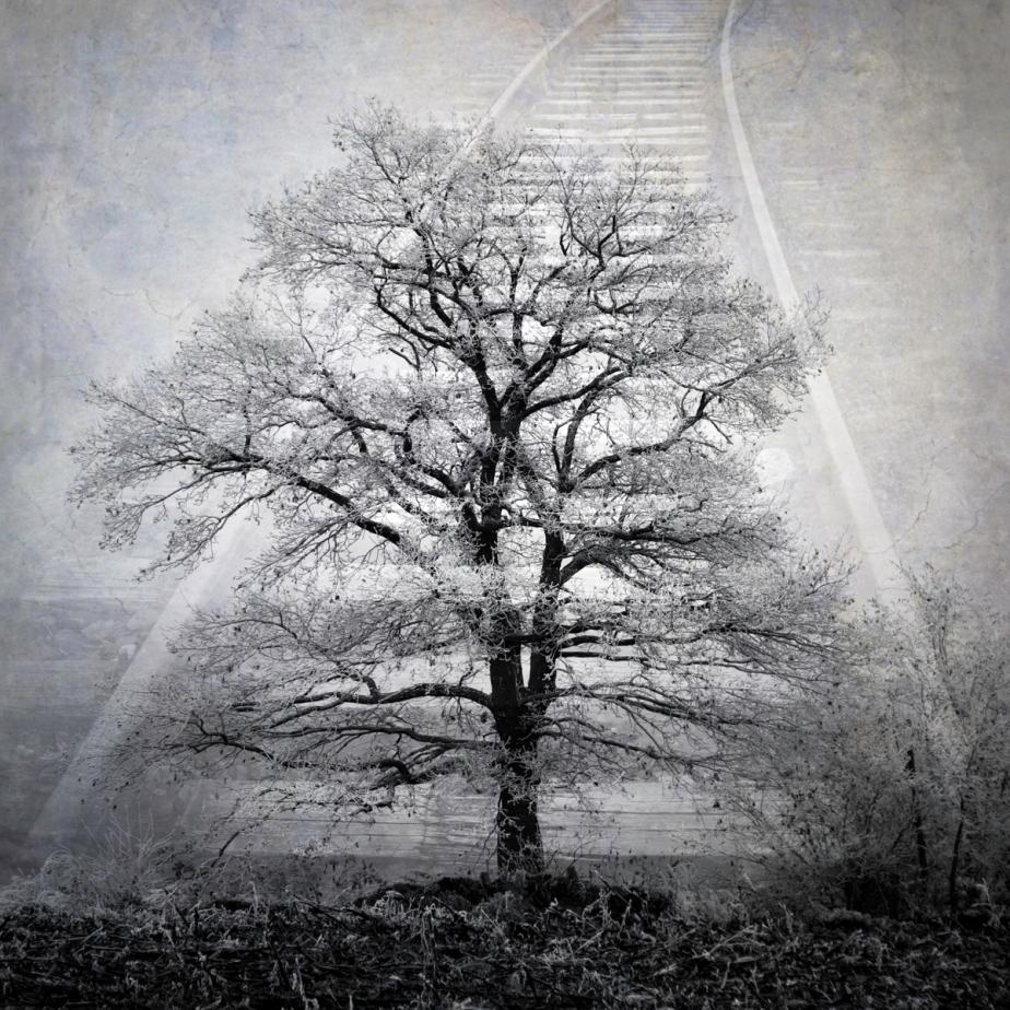 Trees and Tracks © Keron Psillias