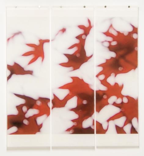 Japanese Maple, No7-3 © Jeri Eisenberg