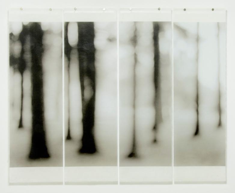 Loon Lake-2 © Jeri Eisenberg