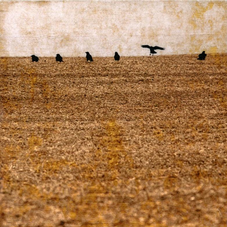 Echoes with The Wind © Brady Wilks