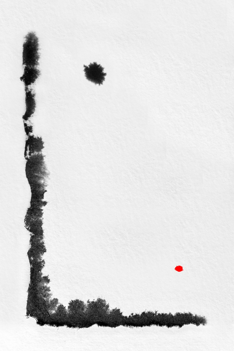 Pt Lobos © Tracy Valleau