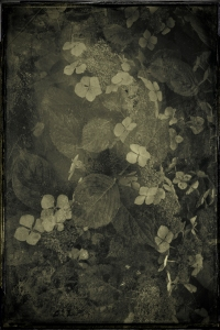 Contemplation 12 © Eduardo Fujii