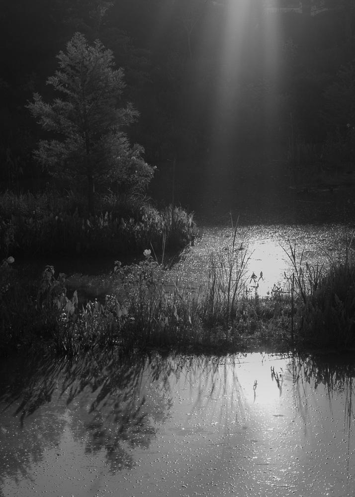 The Pond Project-107 © E.E. McCollum