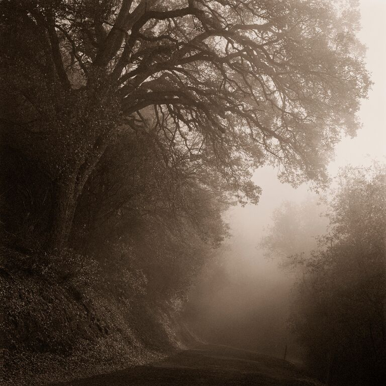 Trees in Fog © Kerik Kouklis