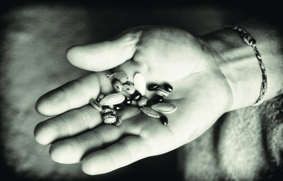Milpa Seeds in Hand © Judith Haden