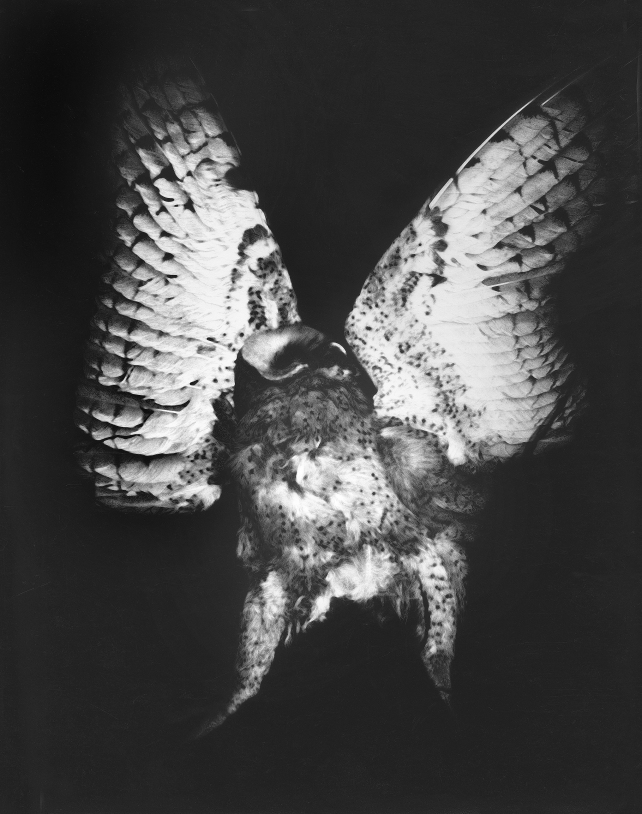 "Screech Owl, Point Arena 1973 ""Mother of Pearls"" portfolio, which is a tribute to Minor White © WIlliam Giles."