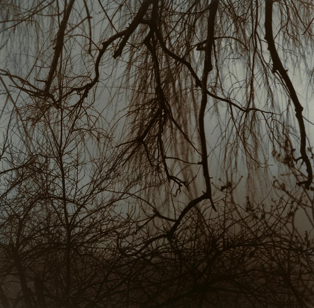 Entanglement #2 ©Kimberly Schneider