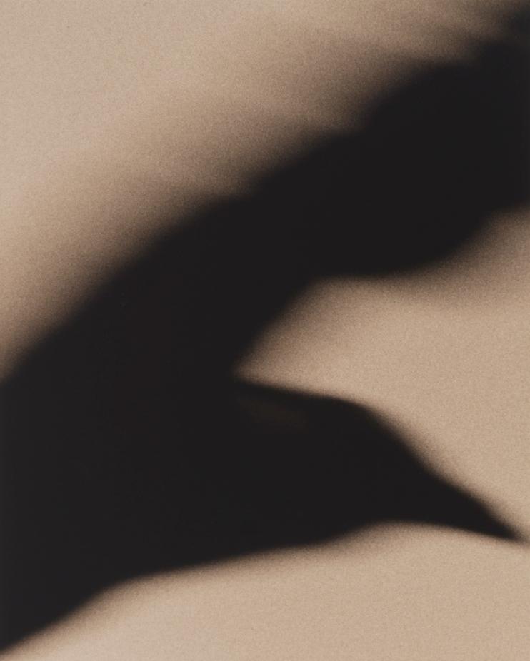 Crow 5 © Jane Olin